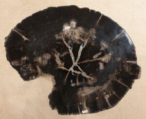 Couchtisch versteinertes Holz 32411
