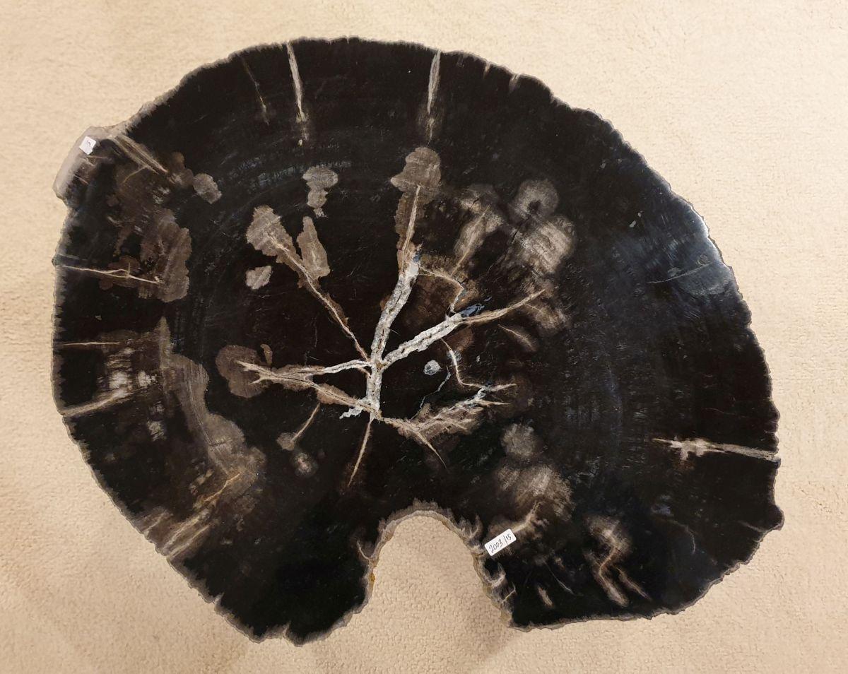 Couchtisch versteinertes Holz 32417