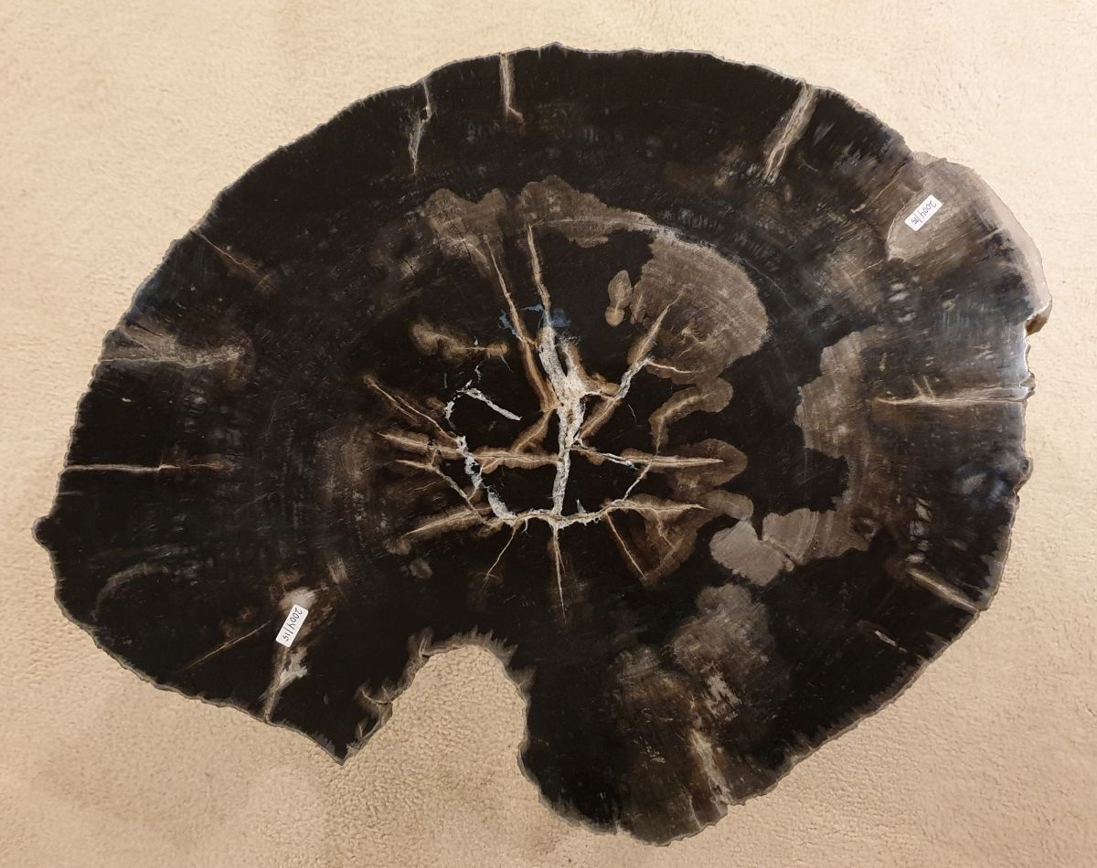 Couchtisch versteinertes Holz 32418