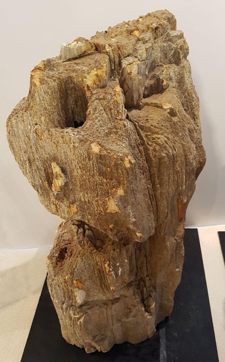 Lápida madera petrificada 27623
