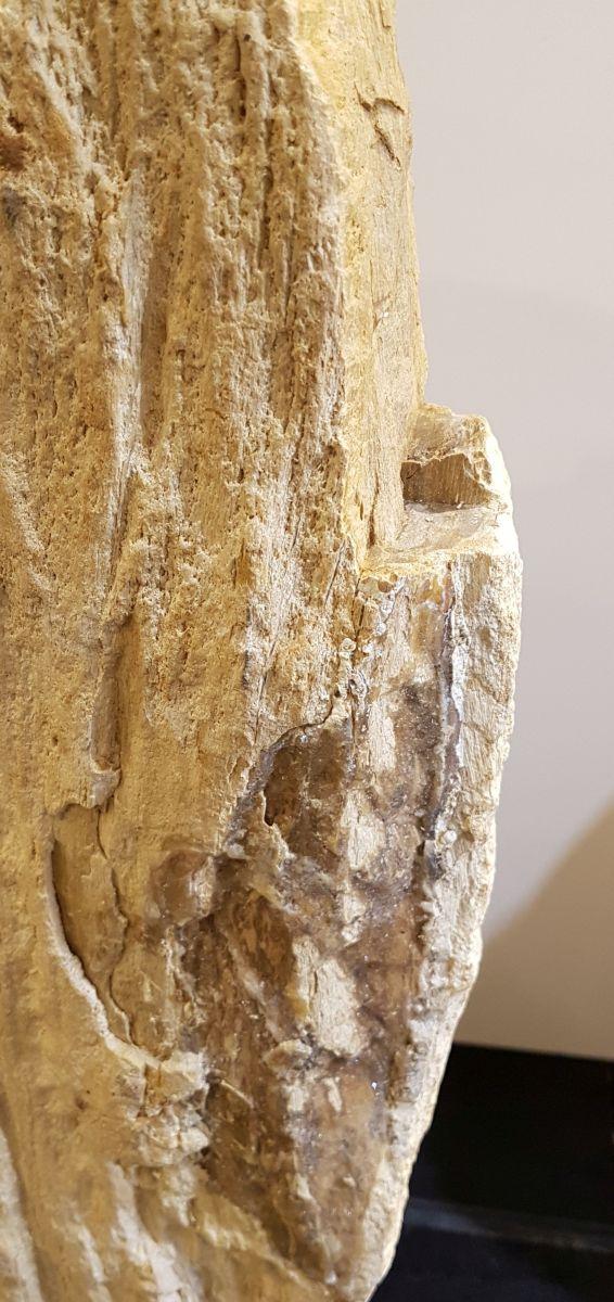 Lápida madera petrificada 33074