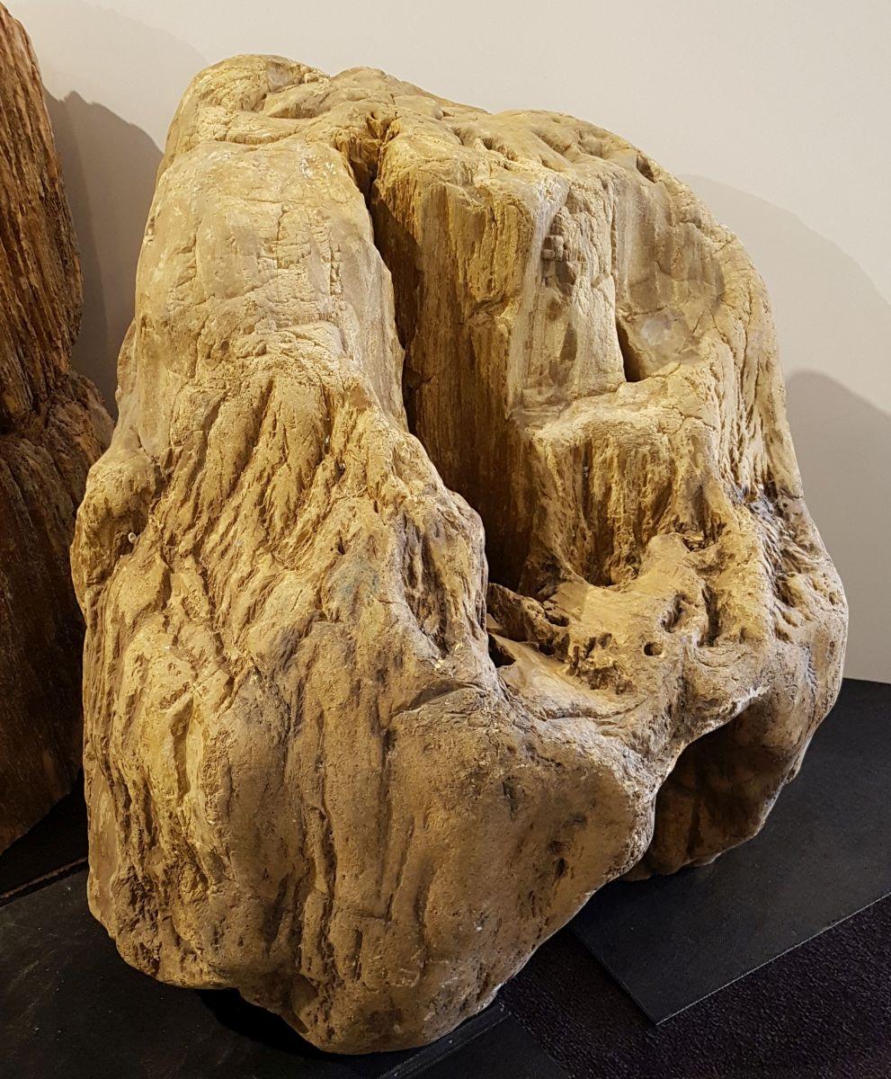 Lápida madera petrificada 33075