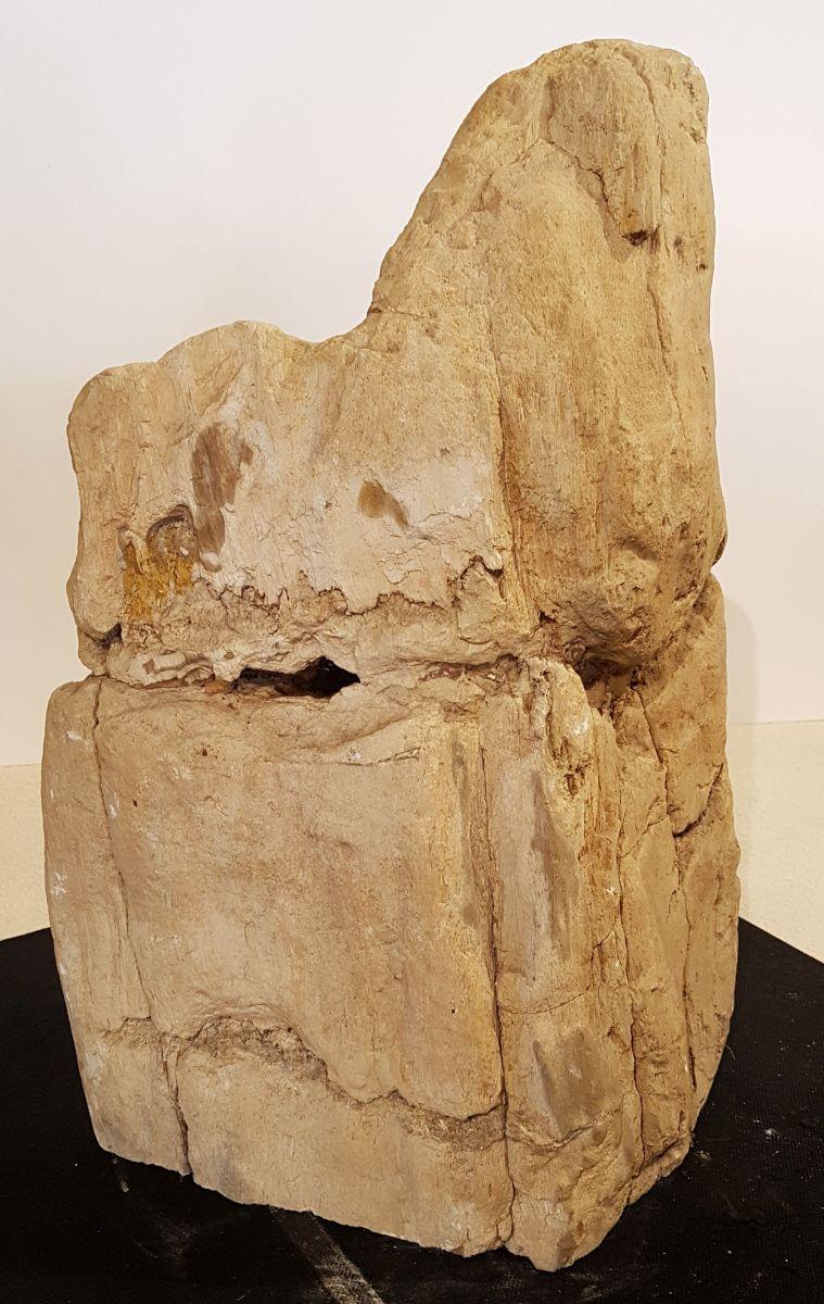 Lápida madera petrificada 33082