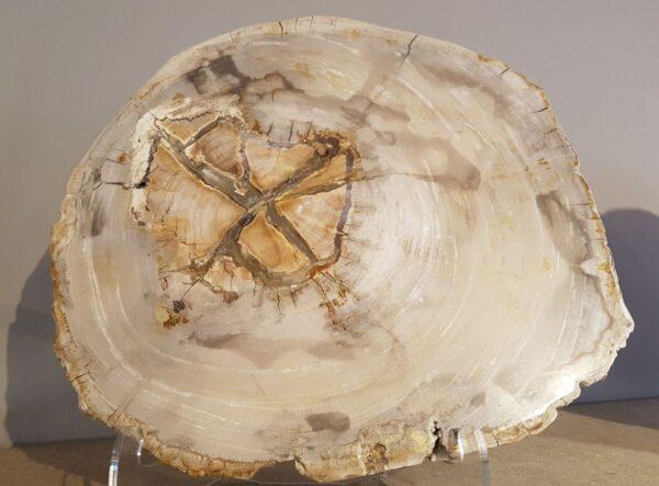 Mesa de centro madera petrificada 28548