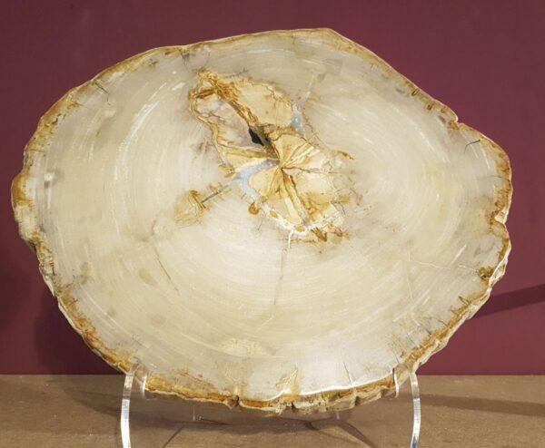 Mesa de centro madera petrificada 31177