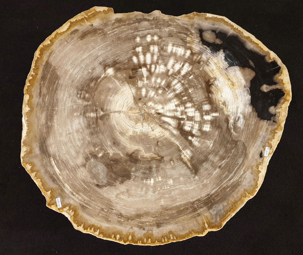 Mesa de centro madera petrificada 32257