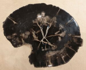 Mesa de centro madera petrificada 32411