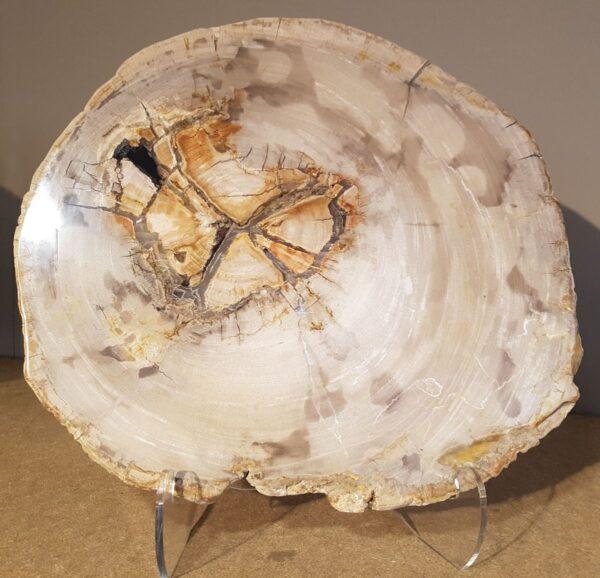 Coffee table petrified wood 28552