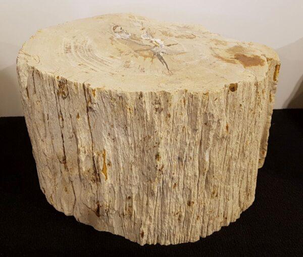 Memorial stone petrified wood 26140