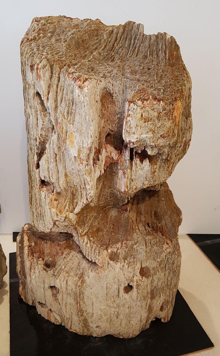 Memorial stone petrified wood 27623