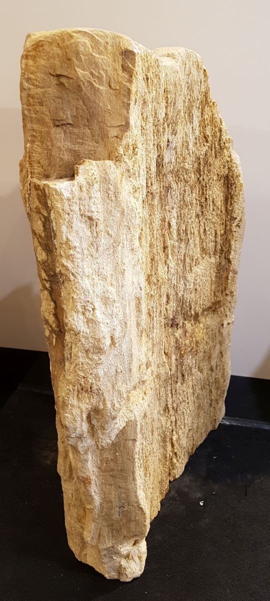 Memorial stone petrified wood 33074