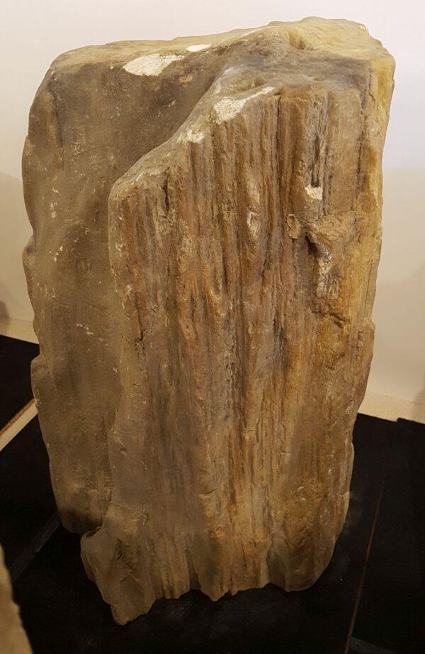 Memorial stone petrified wood 33083