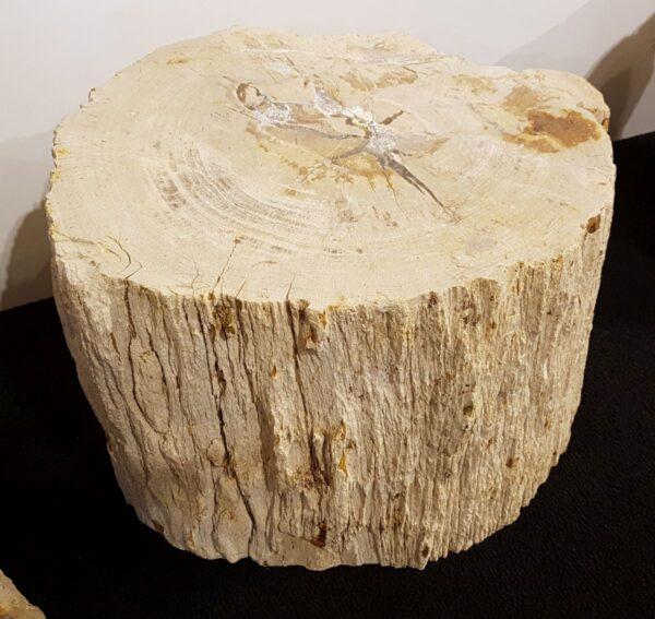 Grafsteen versteend hout 26140