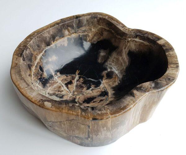 Schaal versteend hout 32524