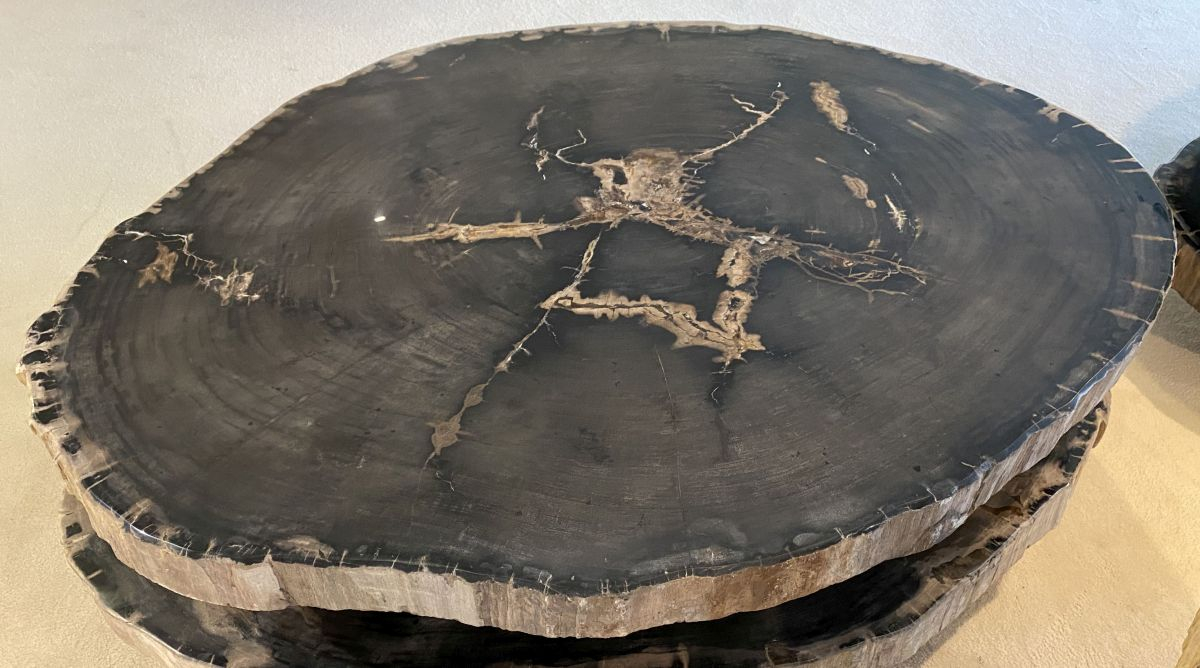 Coffee table petrified wood 34156