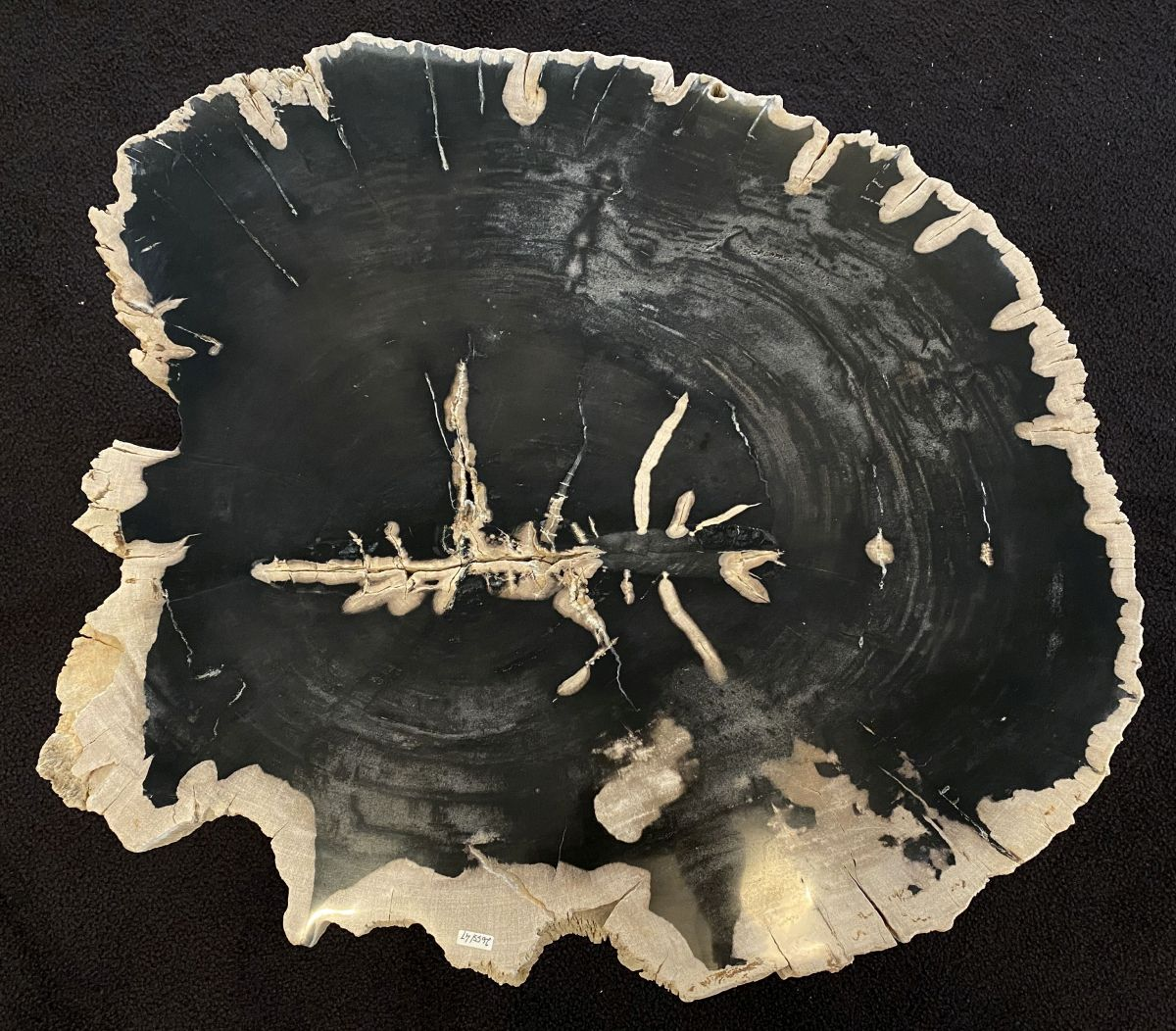 Coffee table petrified wood 34165