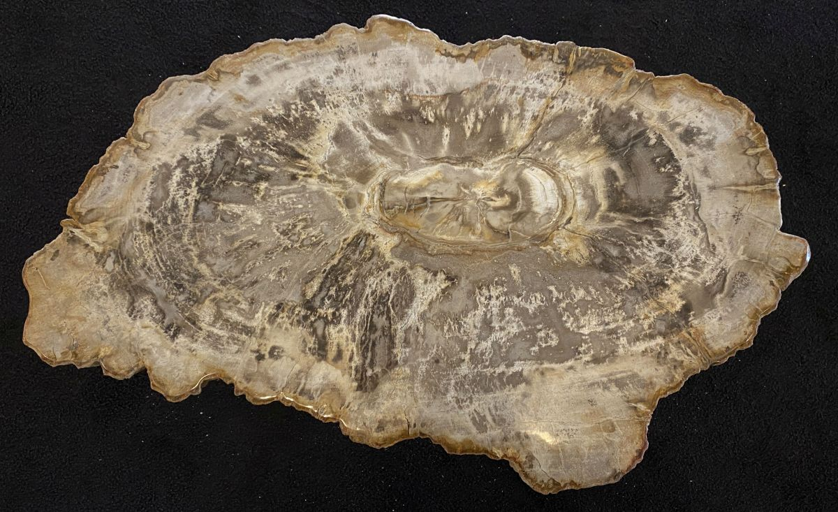 Coffee table petrified wood 34168