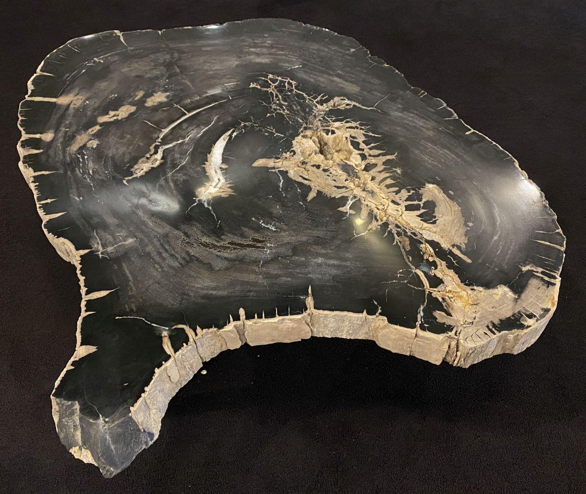 Coffee table petrified wood 34169