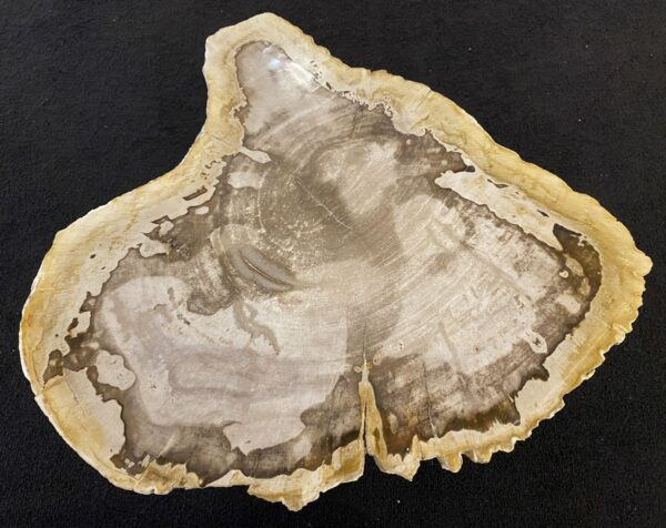 Coffee table petrified wood 34172