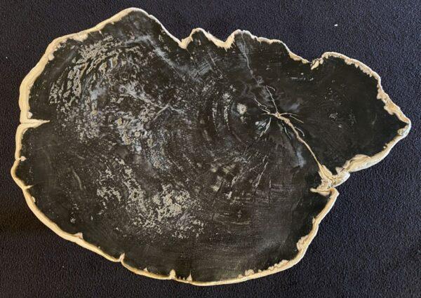 Coffee table petrified wood 34177