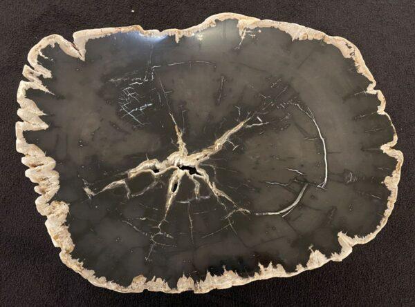 Coffee table petrified wood 34195