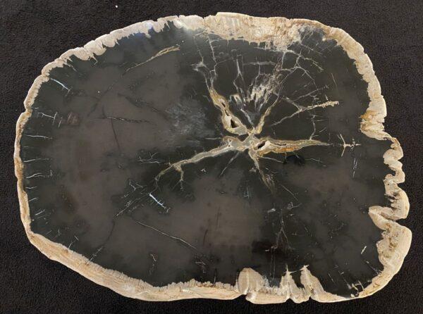 Coffee table petrified wood 34196