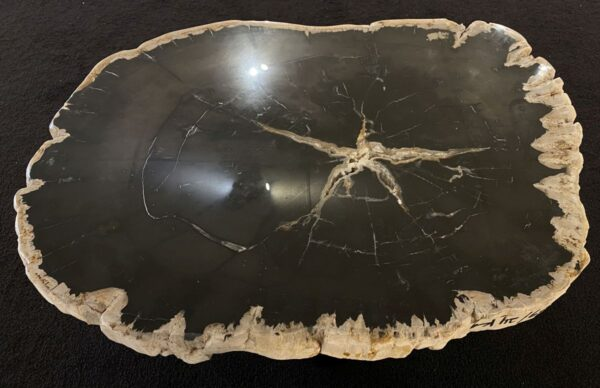 Coffee table petrified wood 34199