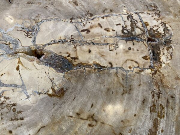 Coffee table petrified wood 34206