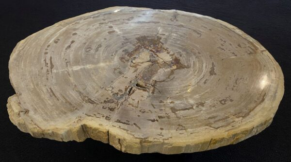 Coffee table petrified wood 34212
