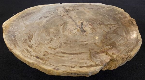 Coffee table petrified wood 34215
