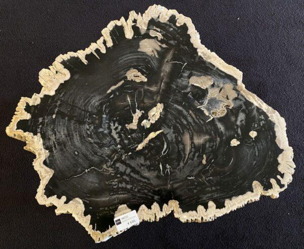 Coffee table petrified wood 34221