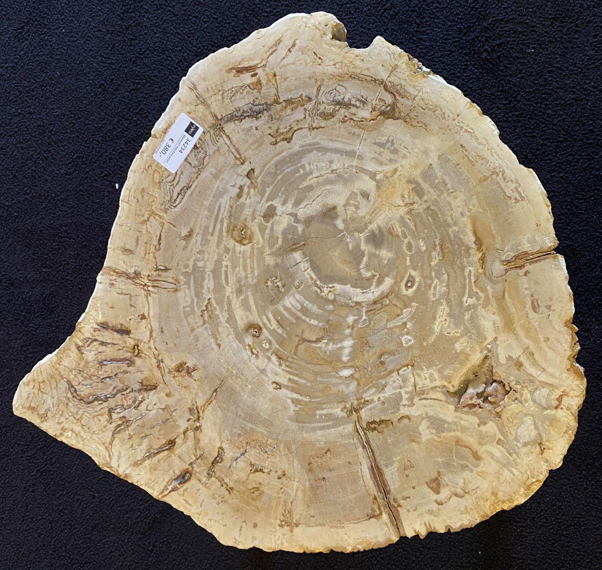 Coffee table petrified wood 34234