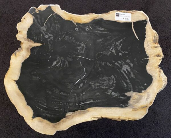 Coffee table petrified wood 34244