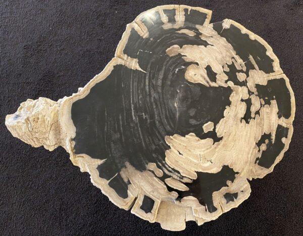 Coffee table petrified wood 34258