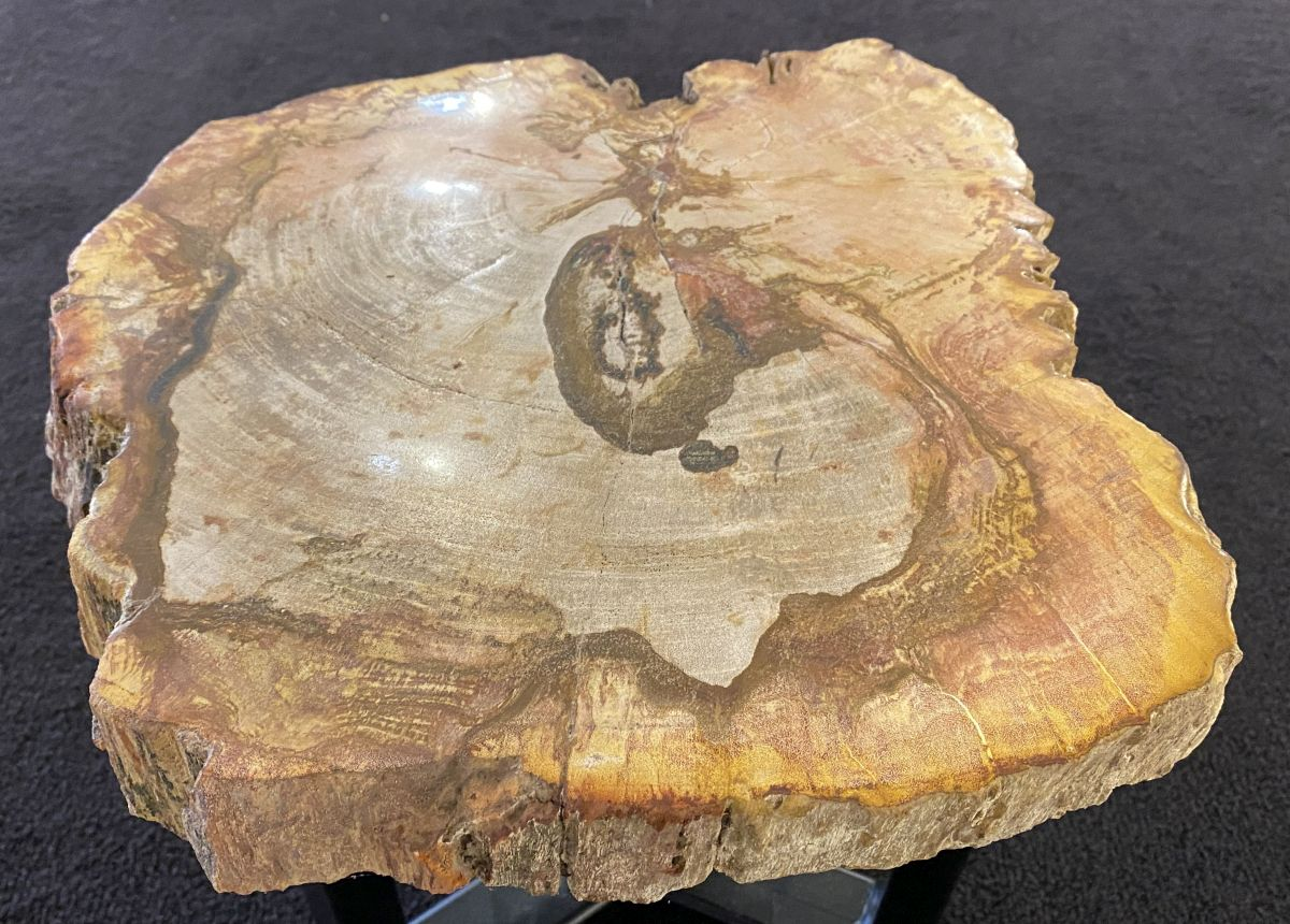 Coffee table petrified wood 34263