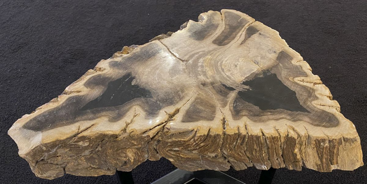 Coffee table petrified wood 34264