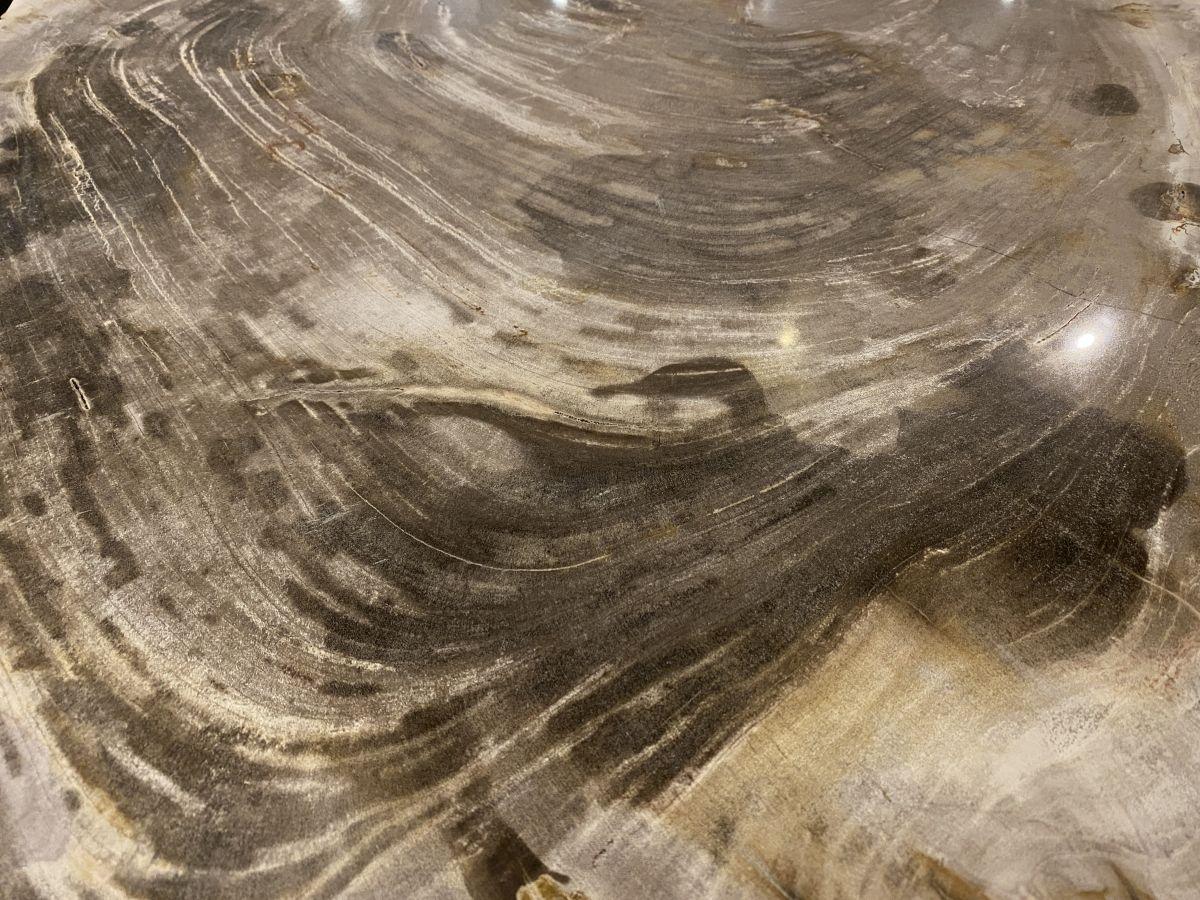 Coffee table petrified wood 34271