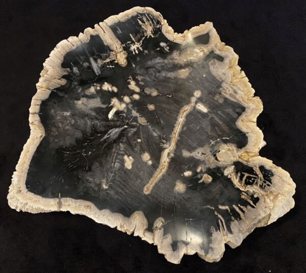 Coffee table petrified wood 34274