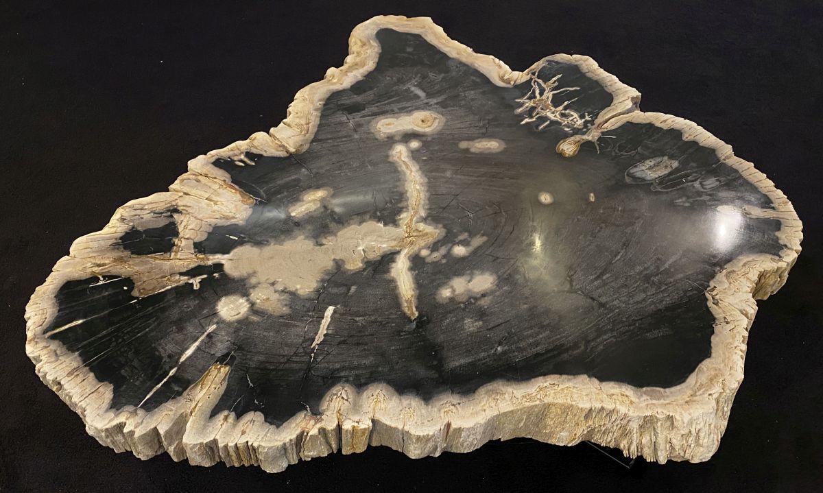 Coffee table petrified wood 34281