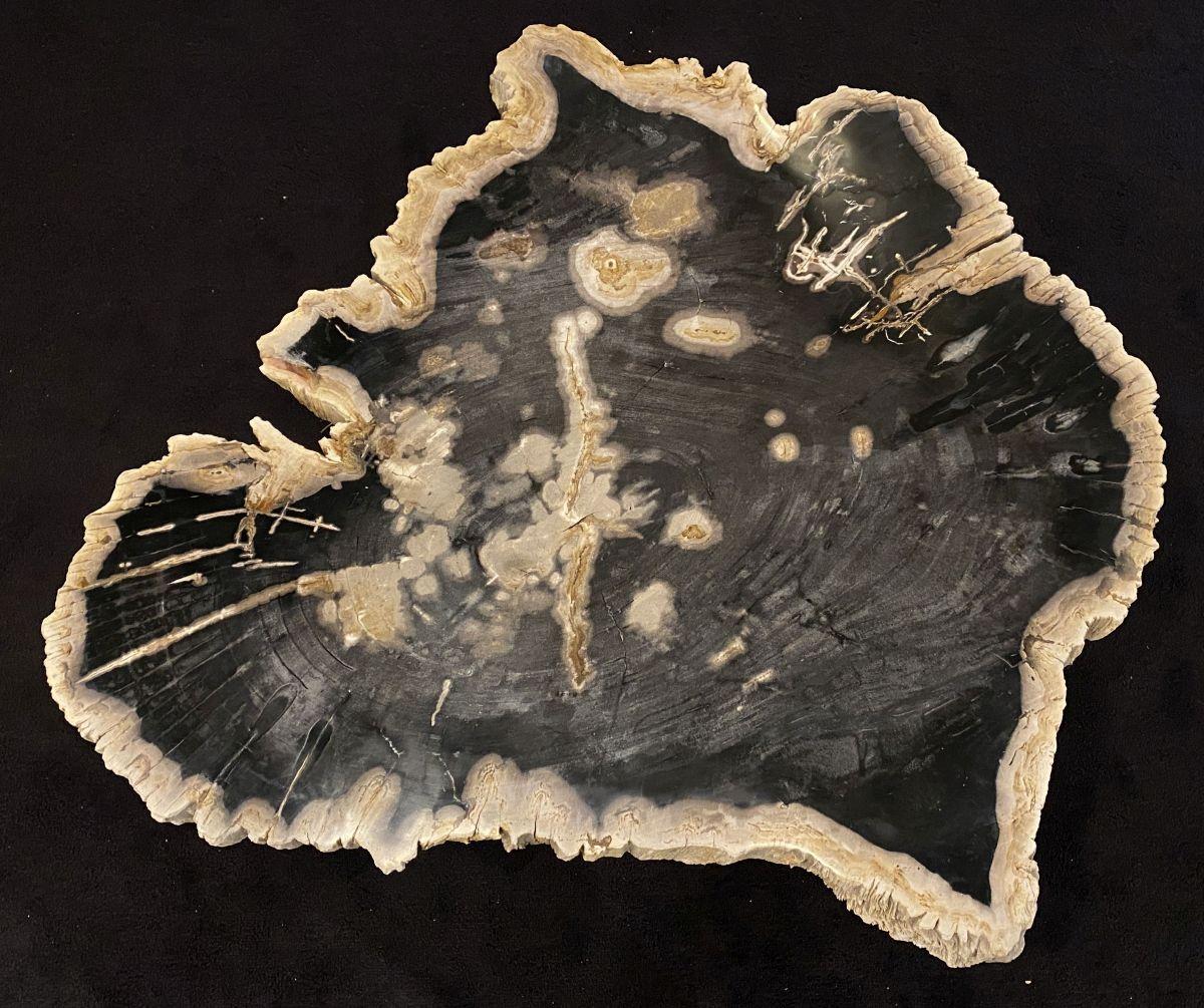 Coffee table petrified wood 34282
