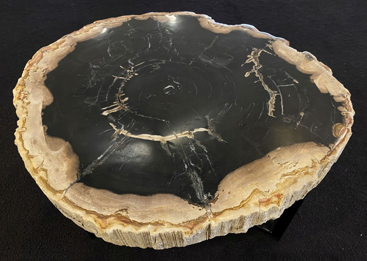 Coffee table petrified wood 34304