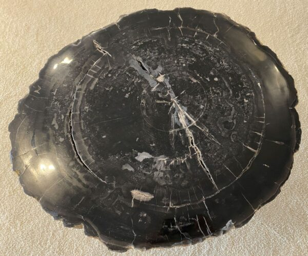 Coffee table petrified wood 34312