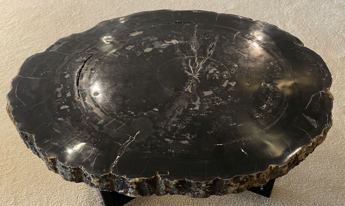 Coffee table petrified wood 34318