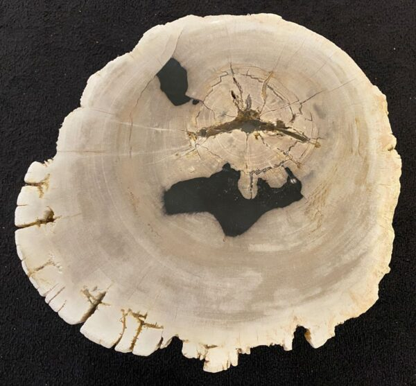 Coffee table petrified wood 34386a