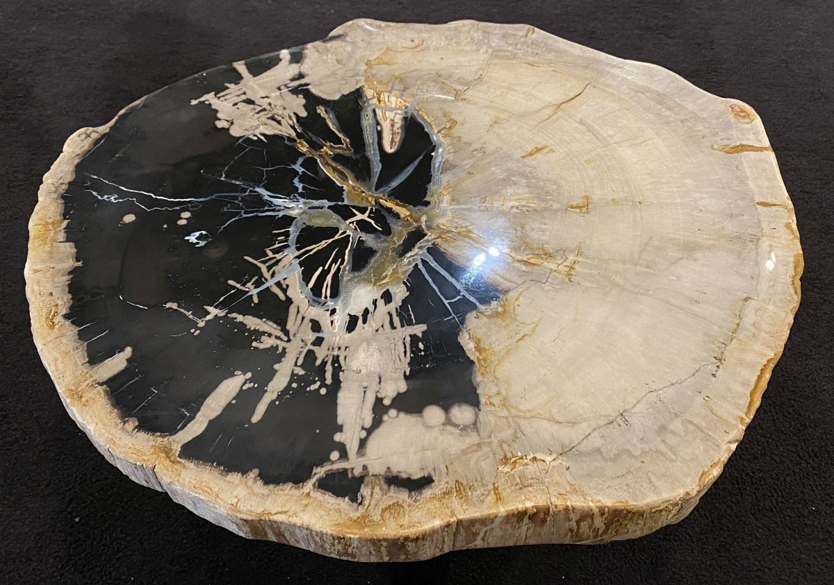 Coffee table petrified wood 34435