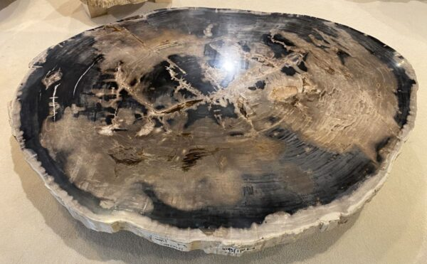 Couchtisch versteinertes Holz 34154