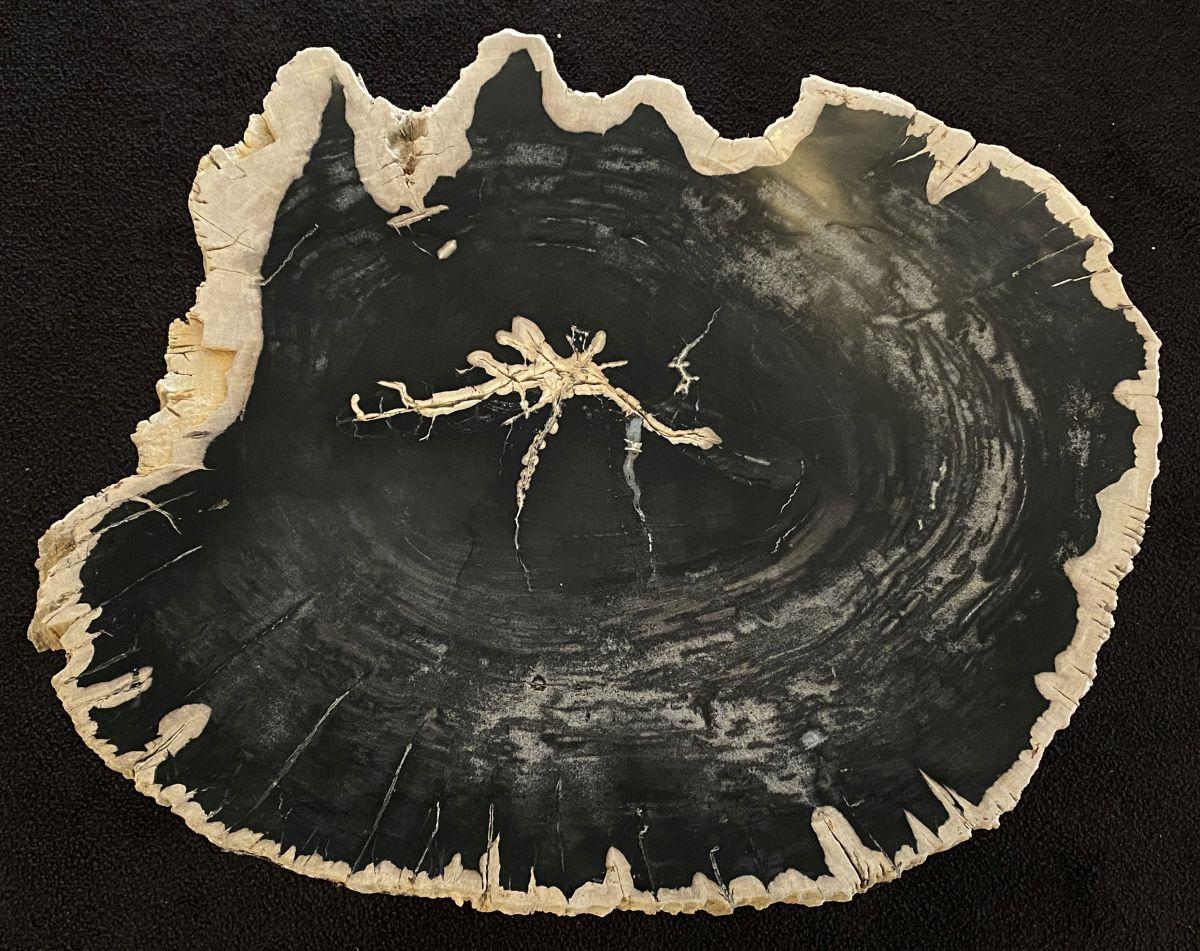 Couchtisch versteinertes Holz 34160