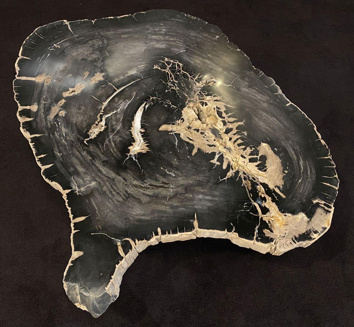 Couchtisch versteinertes Holz 34169