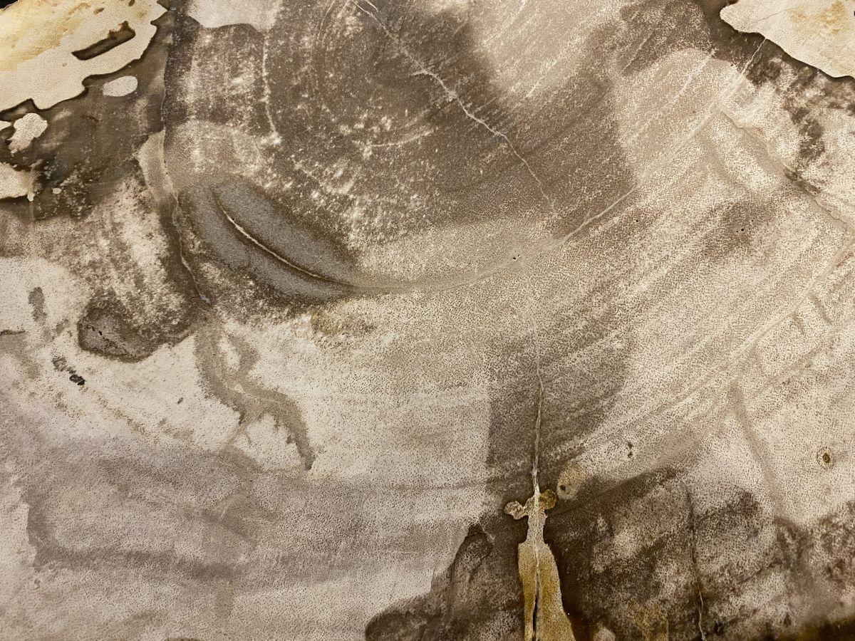 Couchtisch versteinertes Holz 34172