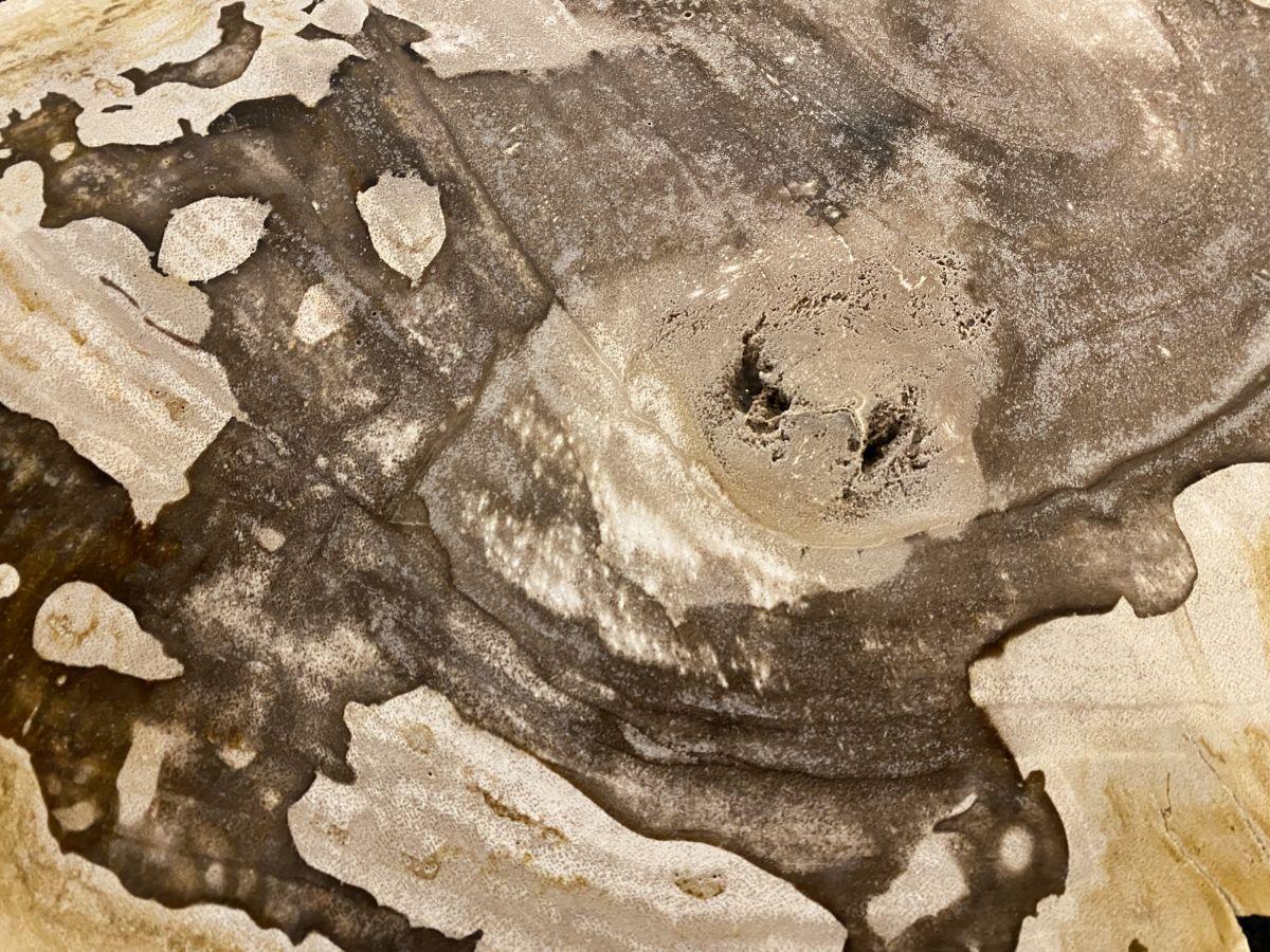 Couchtisch versteinertes Holz 34173
